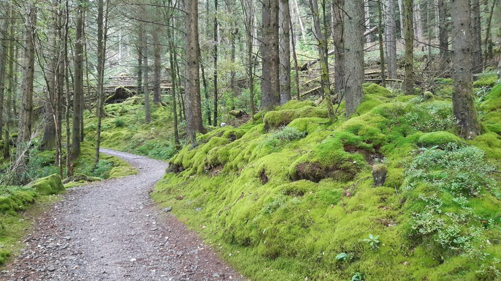 Lovely mossy forest